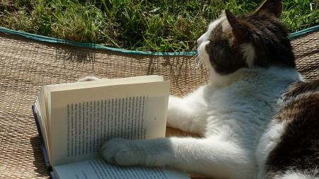 News - Kot-influencer podpisuje książki w bibliotece