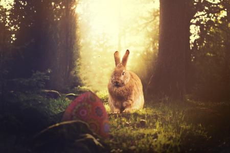 News - Co zobaczymy w telewizji na Wielkanoc 2019?