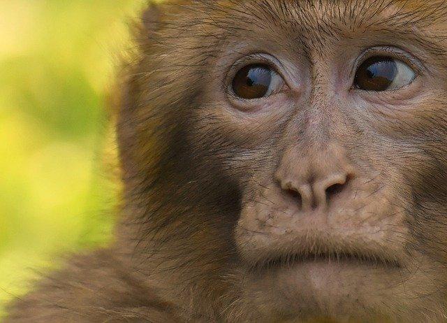 Publicystyka - Bardziej ludzkie niż ludzie. Co łączy człowieka i zwierzęta?