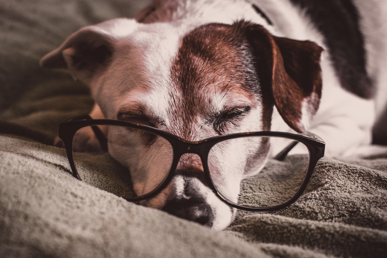 Publicystyka - Dlaczego powinieneś czytać książki swojemu psu i kotu?