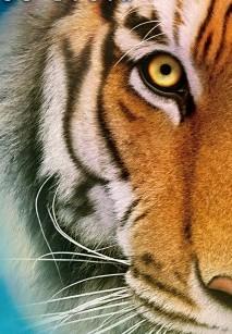 Okładka publicystyki dla Tygrys w Tobie. Recenzja filmowego